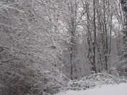 snow02102014