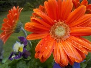 orangeflower04212014