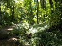 07142014forestpath