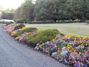 Flowers for Grandma Kitchin