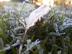 20141117frost