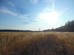 20150824wheatfield